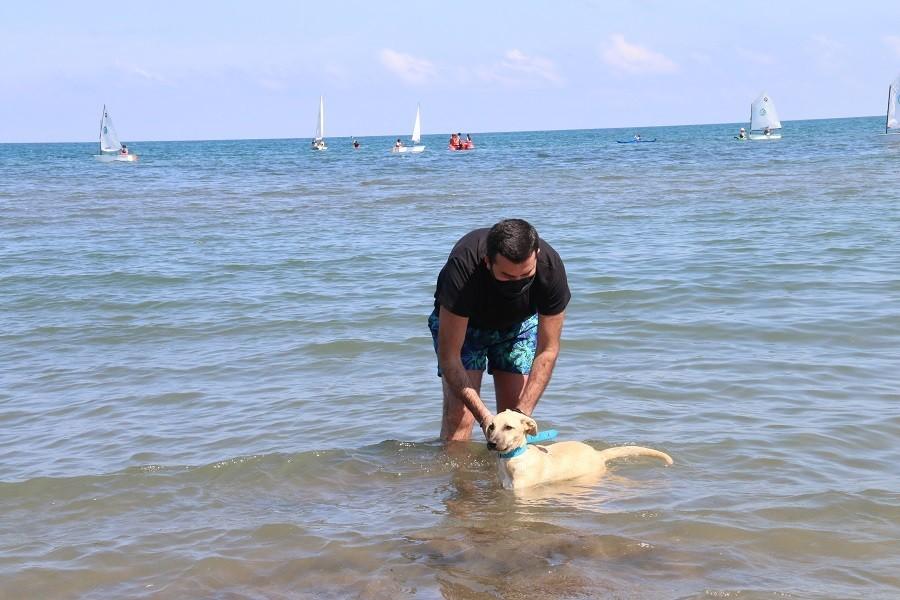 Engelli köpekleri eğlendiren tedavi