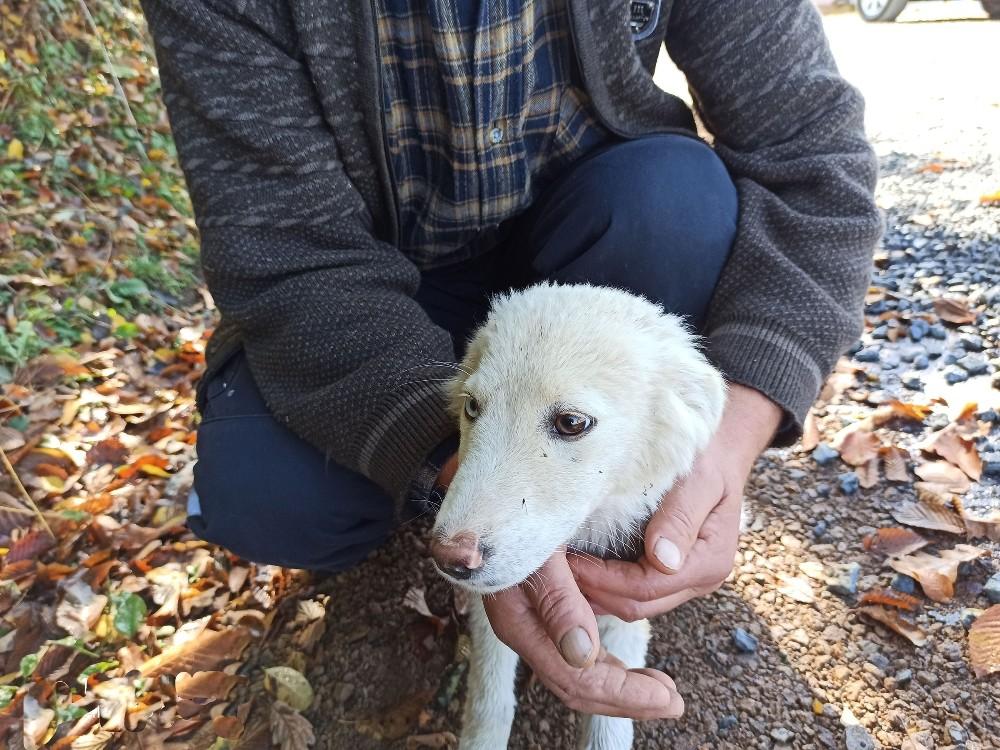 Gözleri farklı renkte olan köpek ilgi odağı oldu
