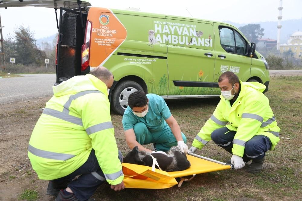 Hayvan ambulansı hayat kurtarıyor