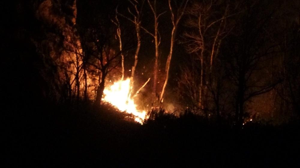 Ordu'daki orman yangınına müdahale sürüyor