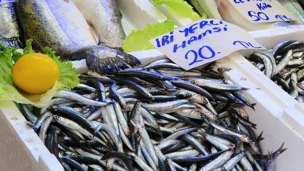 Palamut sezonu bitti, Karadeniz hamsisi 20 lira
