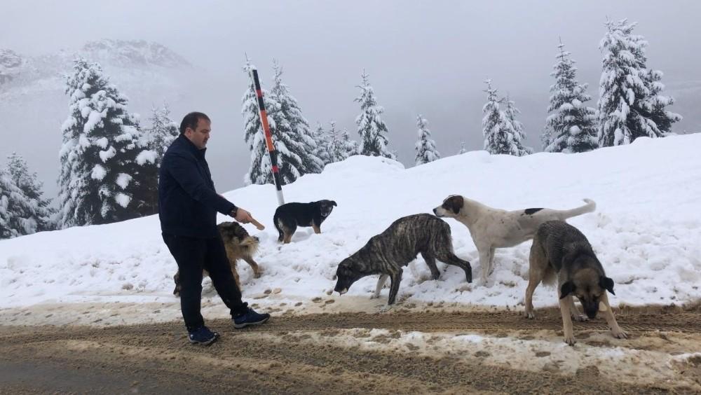 Kar yağışında sokak hayvanları unutulmadı