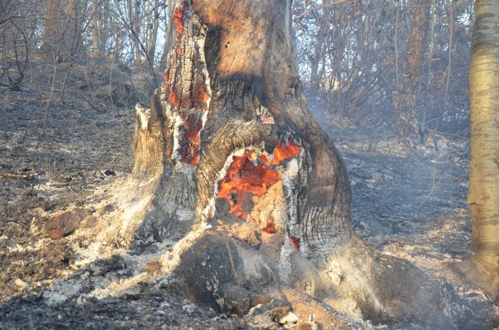 Sigara izmariti 20 dönüm alanı yaktı