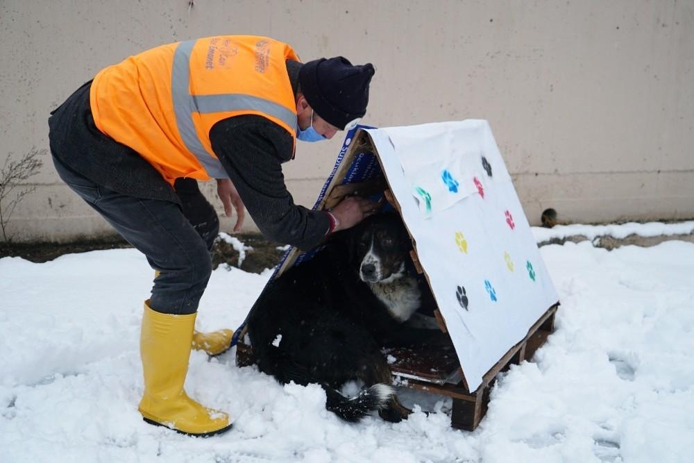 Altınordu'da atık malzemeler, sokak hayvanlarına yuva oluyor