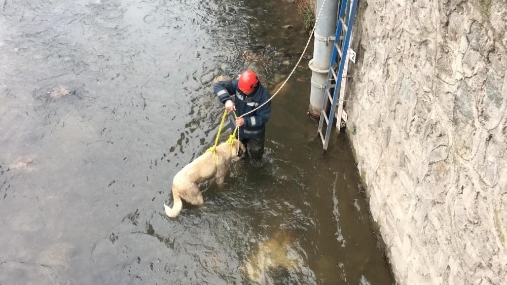Buz gibi suda mahsur kalan çoban köpeğini itfaiye ekipleri kurtardı