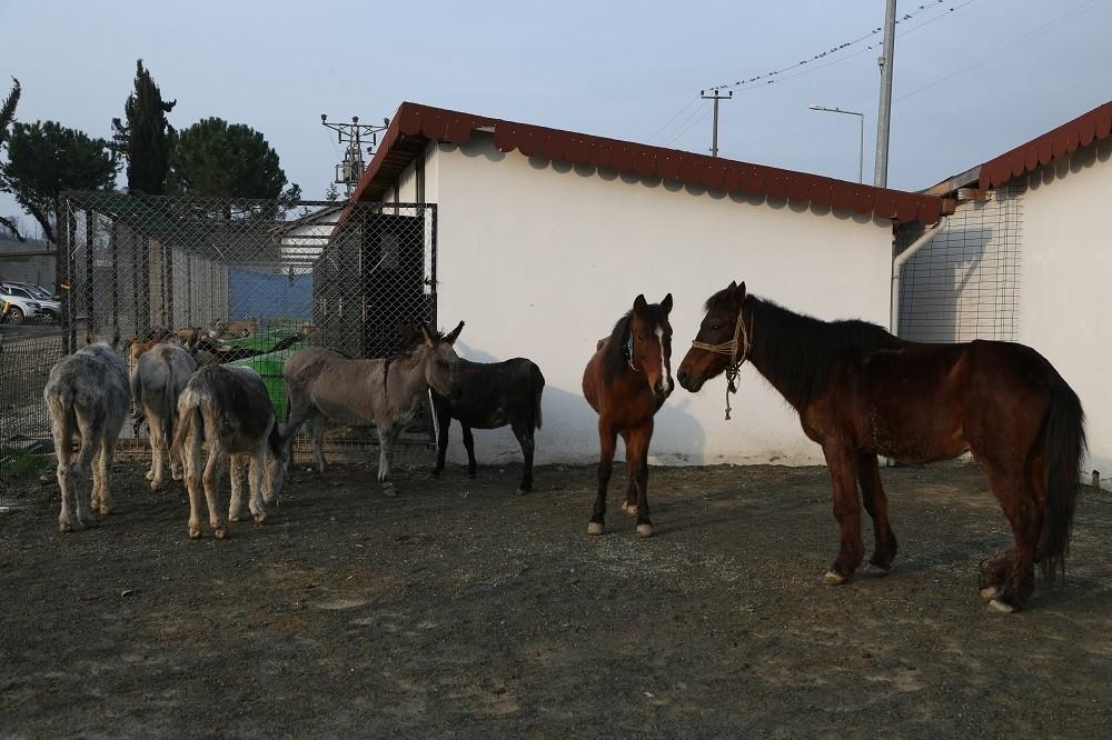 Hayvan barınağının davetsiz misafirleri