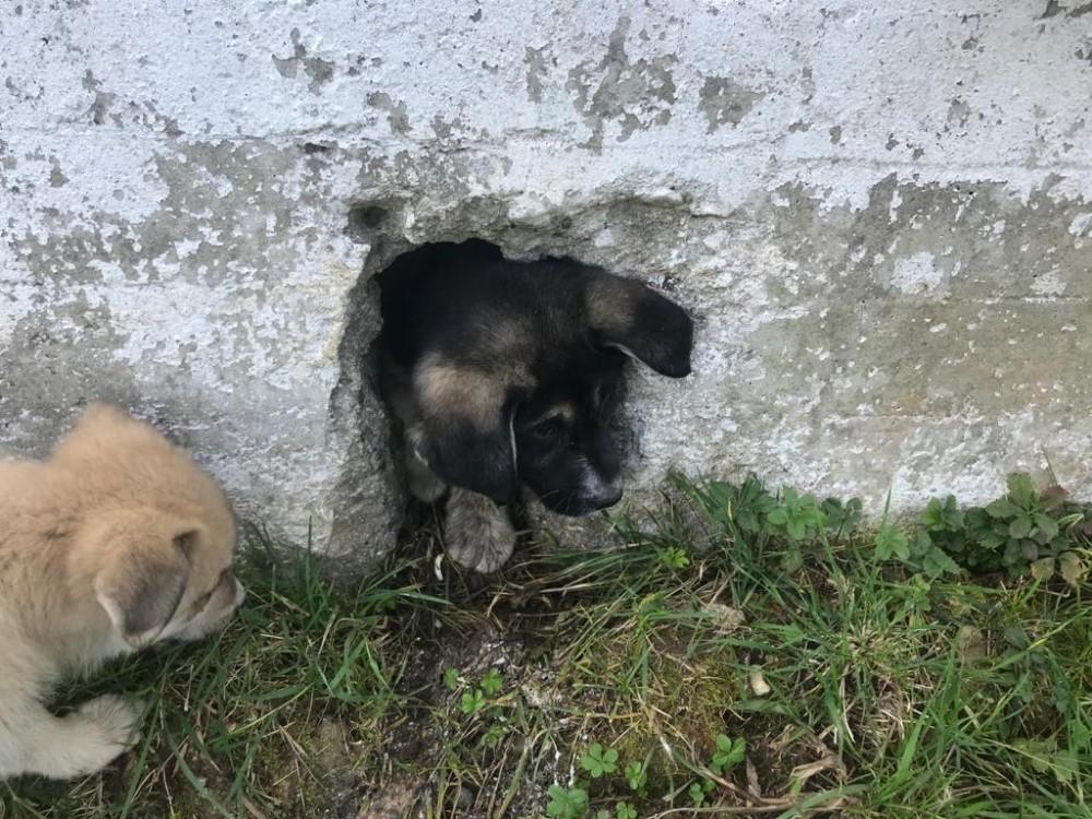 Ordu'da yavru köpek operasyonu