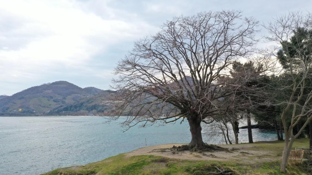 """140 yıllık ıhlamur ağacı """"anıt ağaç"""" oldu"""