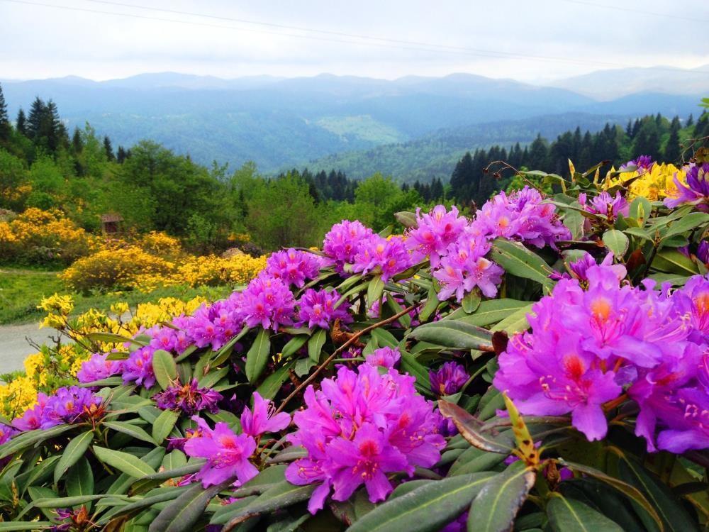 Ordu'ya özgü 179 endemik bitki türü tespit edildi