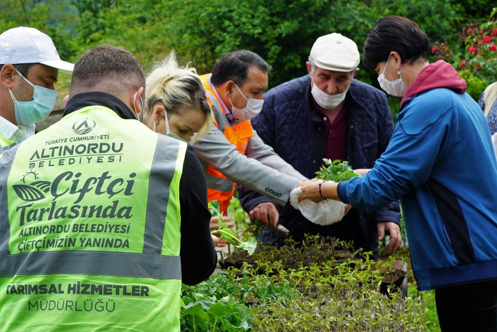 Altınordu Belediyesi, 108 bin adet ücretsiz sebze fidesi dağıttı