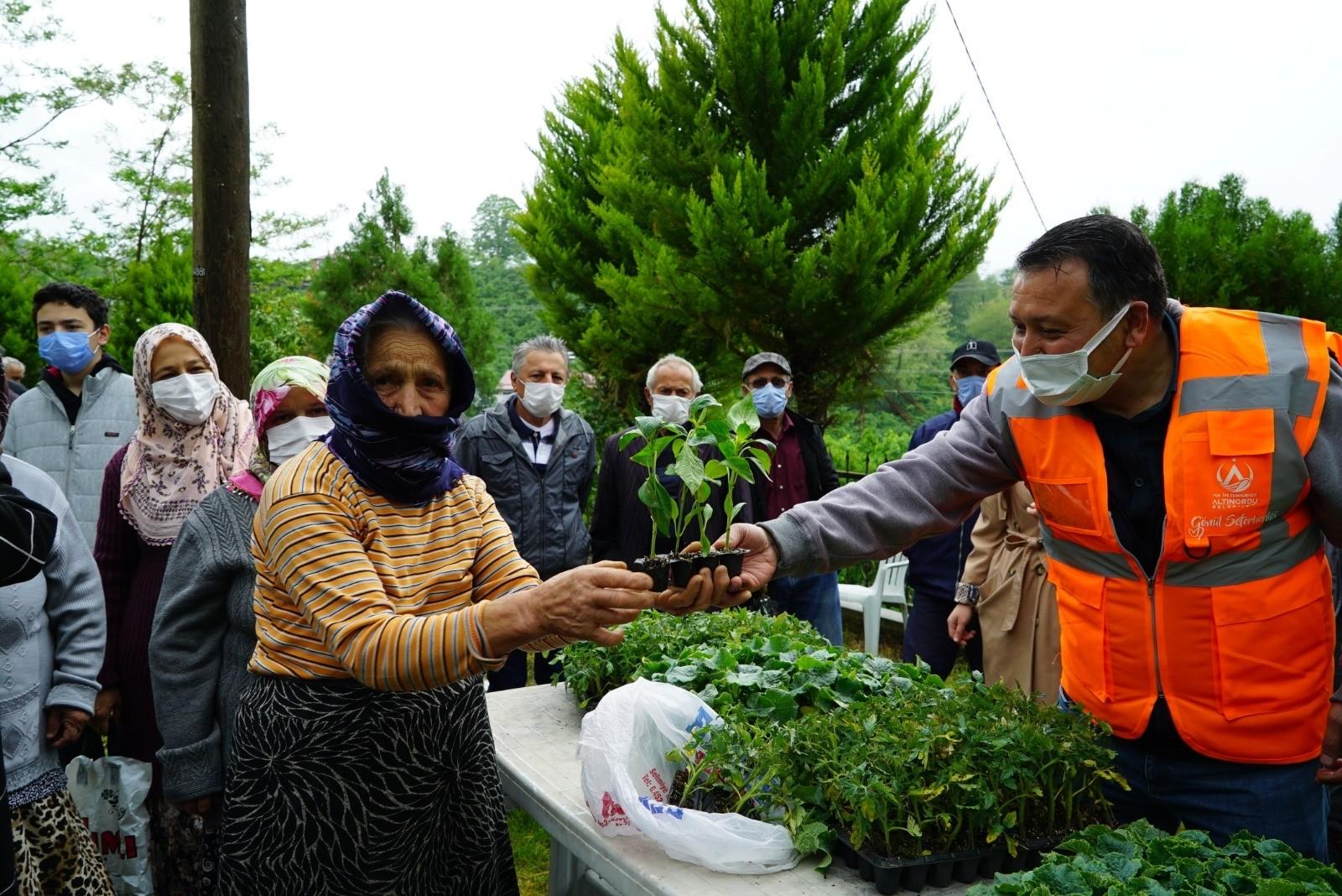 Altınordu Belediyesi'nden çiftçiye 52 bin adet fide desteği