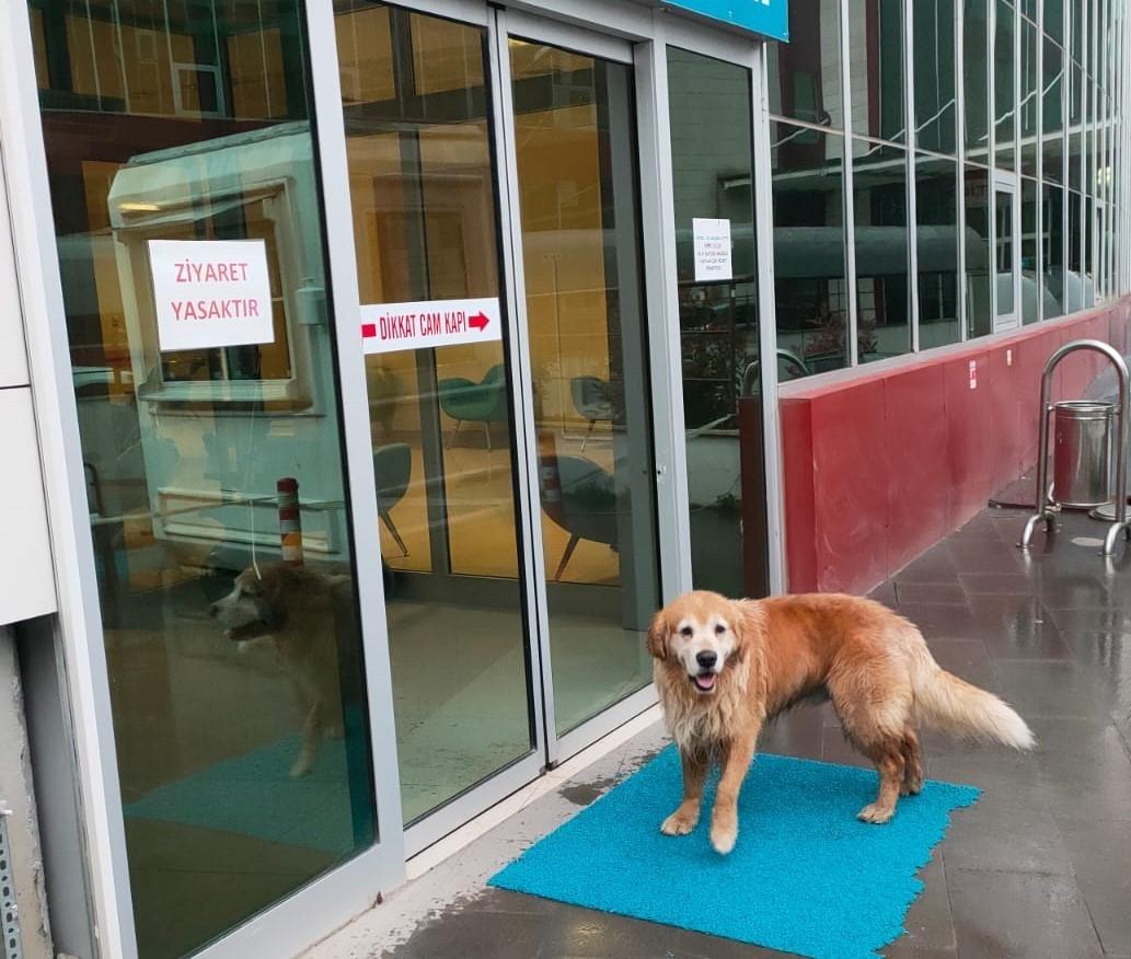Sadık dost hastane önünde sahibini bekledi