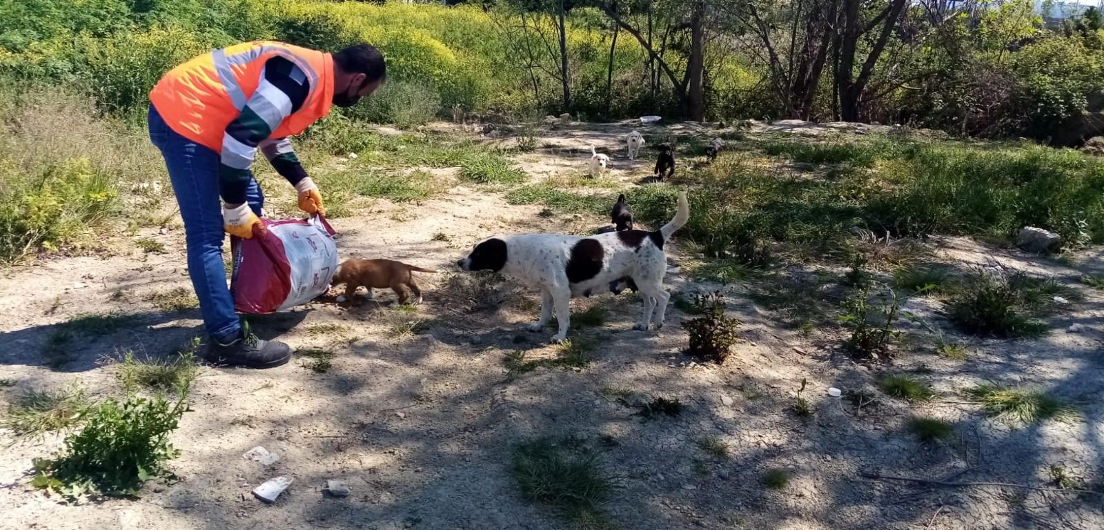 Ünye Belediyesi sokak hayvanlarını unutmadı