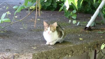 Yavrusu ağaçta kalan anne kedi, saatlerce bekledi