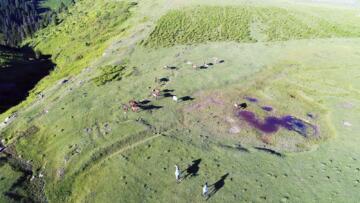 Yılkı atları havadan görüntülendi
